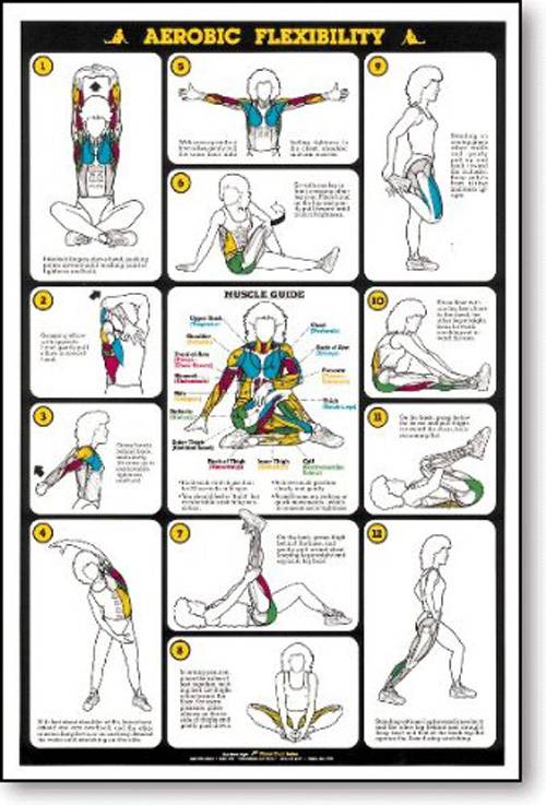 Traps Workout Chart Weight training for women - bing